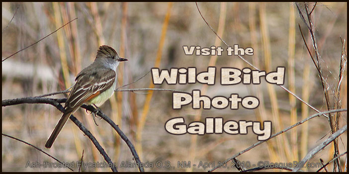 Vist Bird Gallery