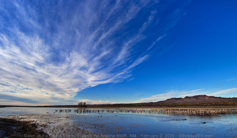 Bosque del Apache Crane Pools