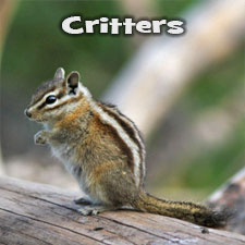 Photos of Critters